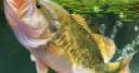 Jeu Jeu pêche à la carpe gratuit
